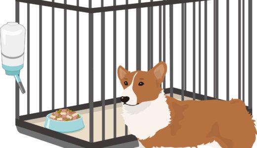 【子犬図鑑】安全な部屋作りのポイント一覧