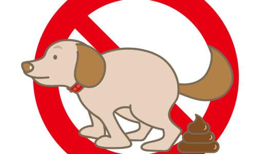 【子犬図鑑】犬のトイレのトラブル解決策/緊急対処方法を理解してストレスフリーに!♪【トイ・プードルの日常】